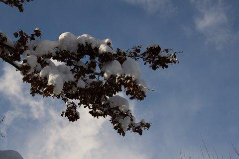 FOTKA - Konečně přišla zima na Ritzensee - Větev pod sněhem