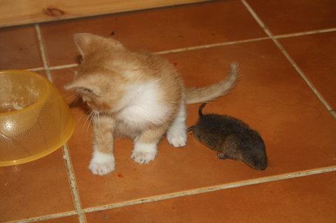 FOTKA - granulky nebo myšku?
