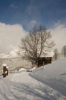 FOTKA - Konečně přišla zima na Ritzensee - Strom u stodoly