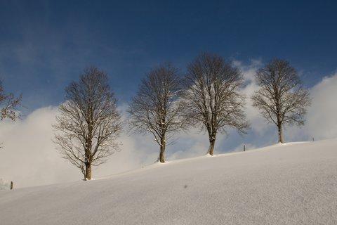 FOTKA - Konečně přišla zima na Ritzensee -Čtyři stromy
