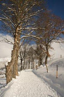 FOTKA - Konečně přišla zima na Ritzensee - Cestou nad jezerem