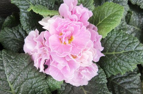 FOTKA - růžový, hezký