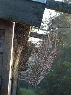 FOTKA - pavučinka
