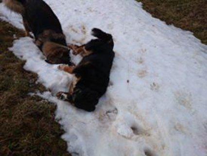FOTKA - holky na sněhu