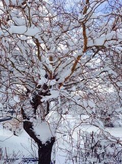 FOTKA - Sněhová peřinka na všem