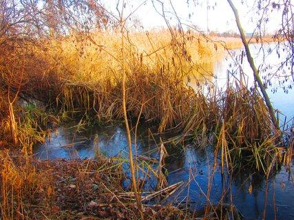 FOTKA - V Chropyni u rybníku