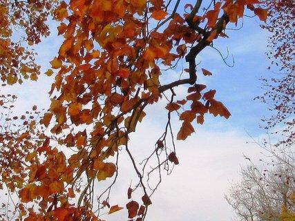 FOTKA - loňský podzim