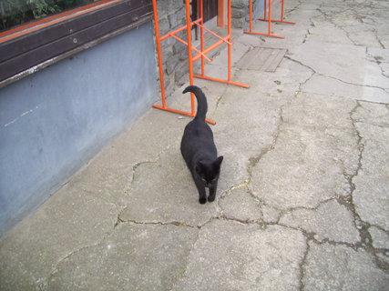 FOTKA - Přítulná kočička