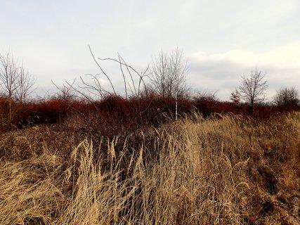 FOTKA - Barvy předjaří,nebo končící zimy?