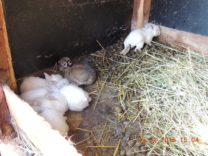 FOTKA - Tytéž králíčci bez maminky 25.2. 2016
