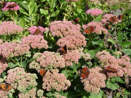 FOTKA - motýli