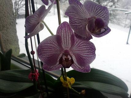 FOTKA - Kvete,dělá mi radost