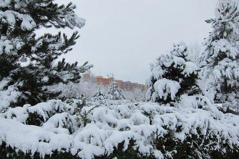 FOTKA - Mám rád chvíli kdy v zahradách první sníh tiše napadá...lalalal