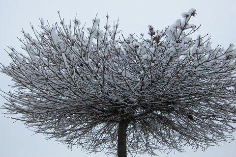 FOTKA - Sláva už je sníh...lalala