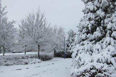 FOTKA - Když padá sníh je ticho bílé .....lalala