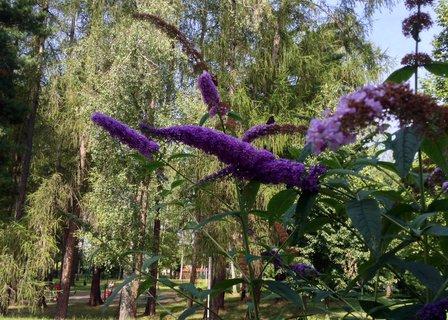 FOTKA - Zajímavá květina u kafe v hamzovce