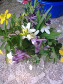 FOTKA - Pozdrav jara
