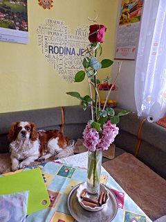FOTKA - Růžička s květy hyacintů a nejdůležitější gratulant