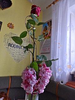 FOTKA - Růžička v detailu