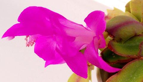 FOTKA - pěkně modelovaný květ - detail