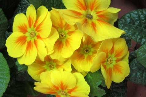 FOTKA - nízký žlutý z květináče