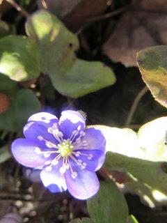 FOTKA - Jaterníky kvetou