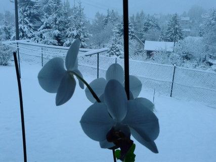 FOTKA - Sněhová nadílka dnes ráno