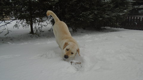 FOTKA - dovádění ve sněhu