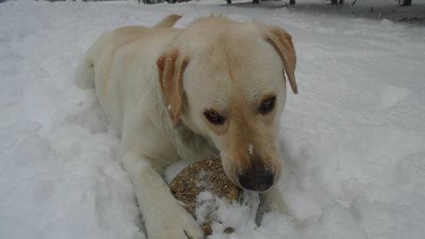 FOTKA - sníh a hrátky