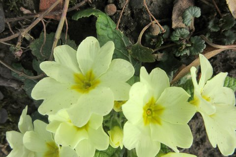 FOTKA - světlounké žluté