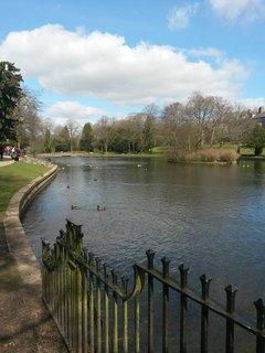 FOTKA - v prírode v Anglicku
