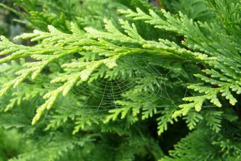 FOTKA - jemná pavučinka