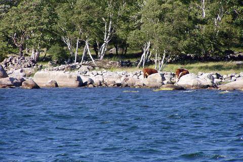 FOTKA - Krávy u moře