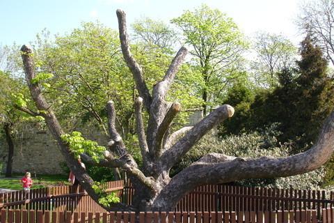 FOTKA - strom na Petříně