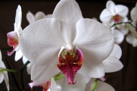 FOTKA - Nádherně ohromná orchidej