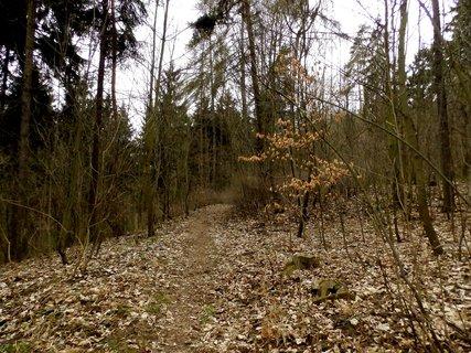 FOTKA - Jdeme do pralesa (bývalého lázeňského parku).