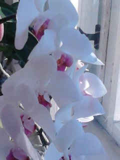 FOTKA - orchidej samý květ