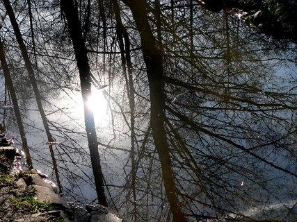 FOTKA - Zrcadlení jara