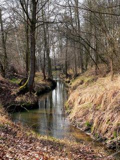 FOTKA - Potok na jaře