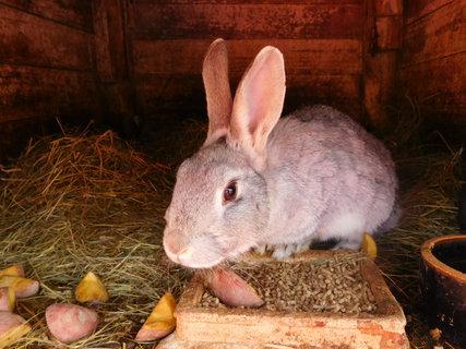 FOTKA - Náš králík
