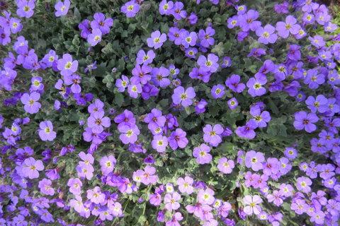 FOTKA - kobereček květů