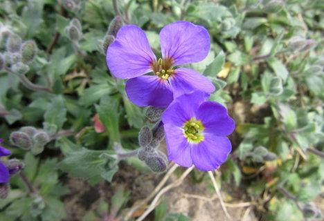FOTKA - lila kvítky