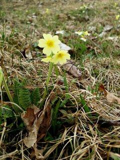 FOTKA - Po delší době na Ritzensee - Žluté