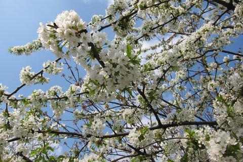 FOTKA - Květy na sídlišti