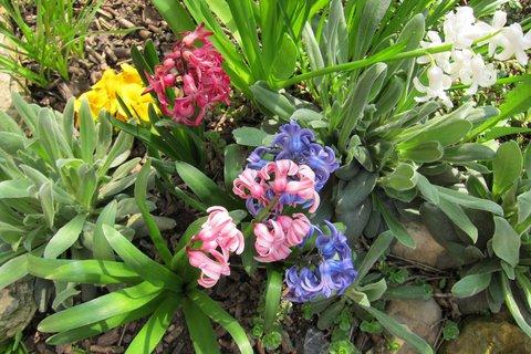 FOTKA - Barvičky jara