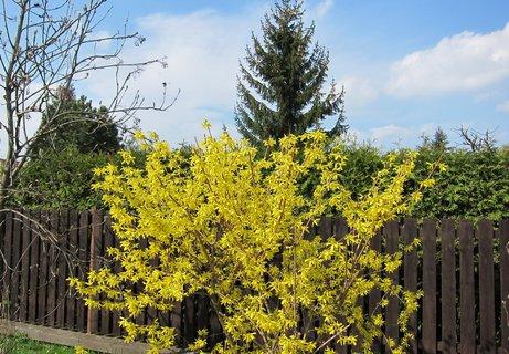 FOTKA - Květem ozdobený plot