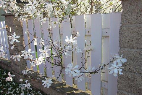 FOTKA - Plot ozdobený květy
