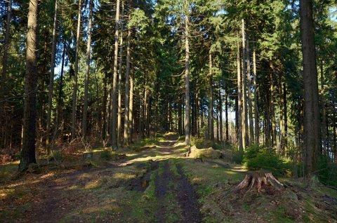 FOTKA - Když slunce v lese čaruje