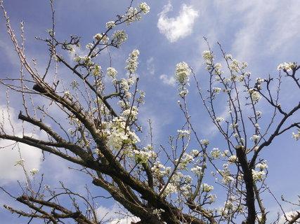 FOTKA - stromky v bielom závoji....