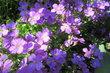 kvetly v květnu